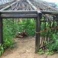金鶏を入れた小屋